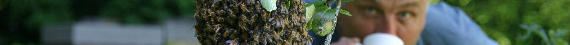 Beekeeping and Natural Honey Wirral